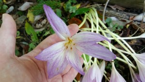 Mystery flower1