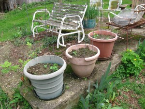 Garden 006